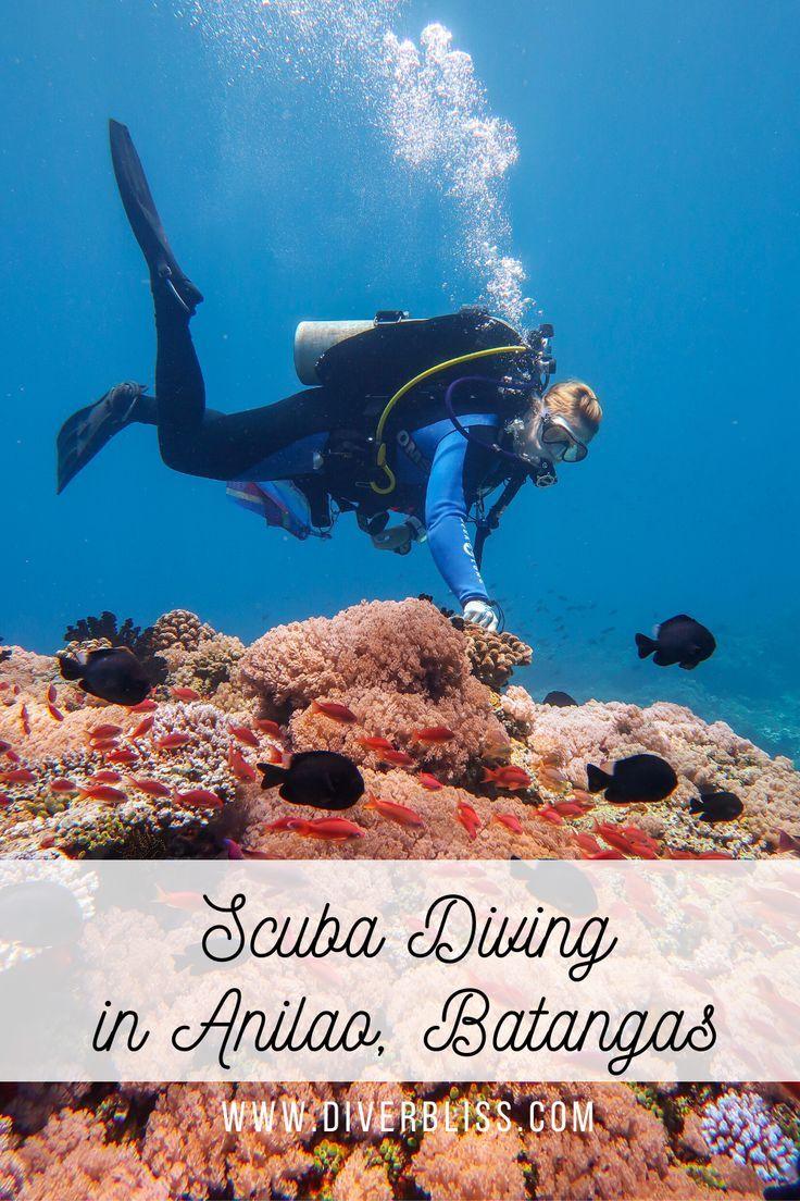Scuba Diving Experience In Anilao Batangas Philippines Diver Bliss In 2020 Scuba Diving Diving Scuba