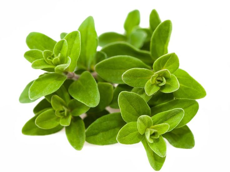 The health benefits of Marjoram Essential Oil can be attributed to its properties like analgesic, antispasmodic, an aphrodisiac, and an antiseptic