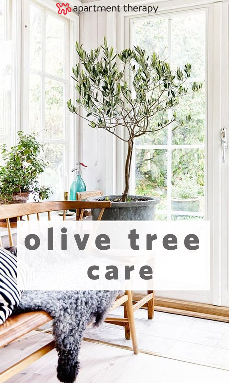 25 Best Ideas About Sage Living Room On Pinterest Green