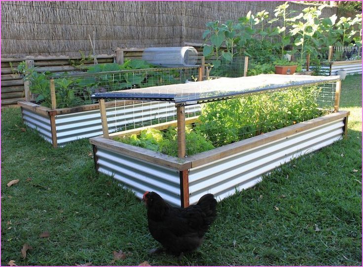 Ooh The Wire Around The Sides Top Are A Great Idea For Keeping Out Raised Garden Bed Plansraised