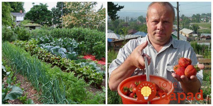 Môj svokor vždy hovoril, že každú zlú situáciu v záhrade zvládnem vďaka trom veciam z kuchyne .