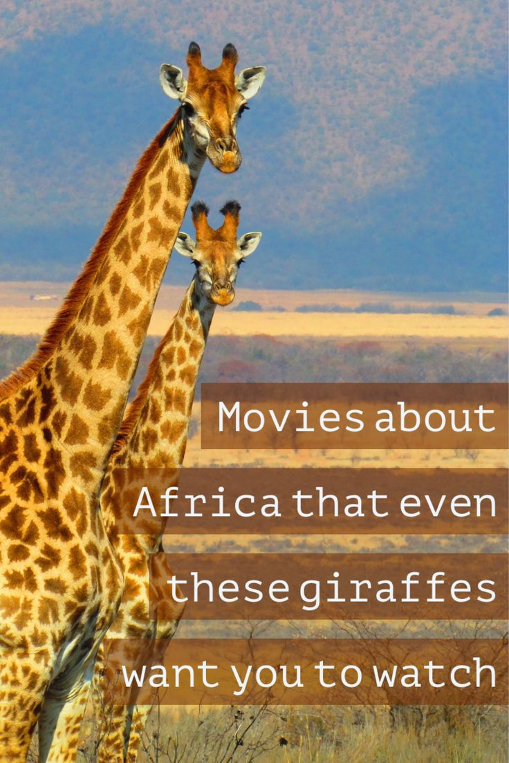 Movies About Africa to Watch Before Visiting the Continent