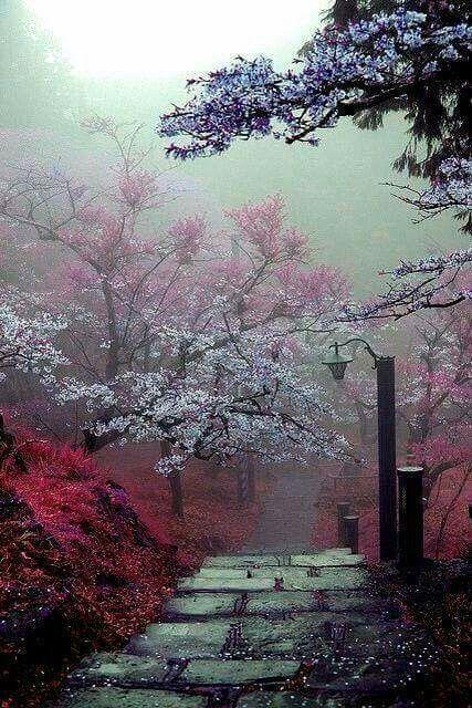 Hermoso paisaje de Japón, en realidad, una excelente fotografía donde se puede apreciar el paisaje