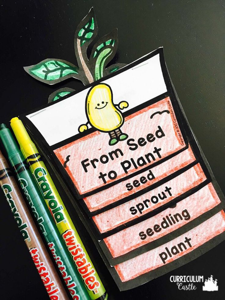 Plant Life Cycle activities: From Seed to Plant mini flip book!