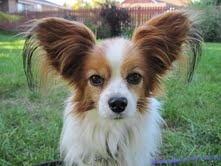 How cute is this guy?? Someone must want to adopt a cute little guy like this o_O
