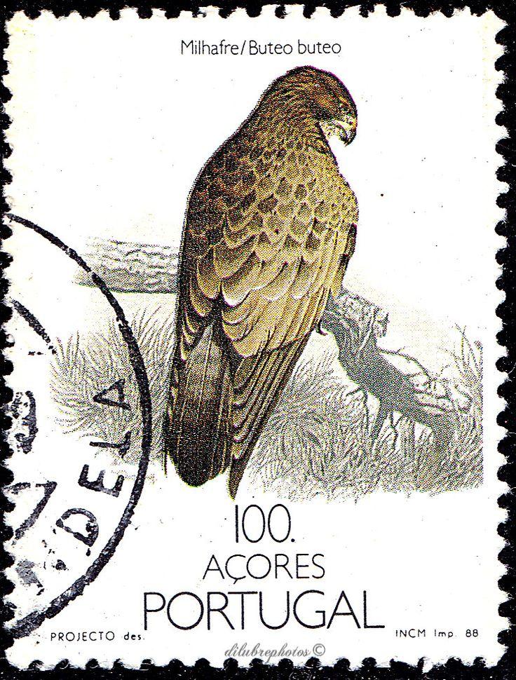 Portugal-Azores.  BIRDS.  BUTEU BUTEU. Scott 148 A34, Issued 1988 Oct 8, Litho.,  100. /ldb.