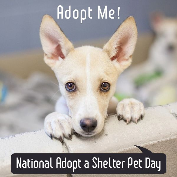 National Adopt A Shelter Pet Day Animals Pet Day Female Dog Names