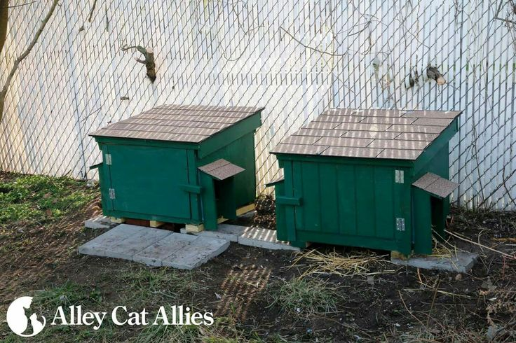 Feral cat feeding boxes at Alley Cat Allies