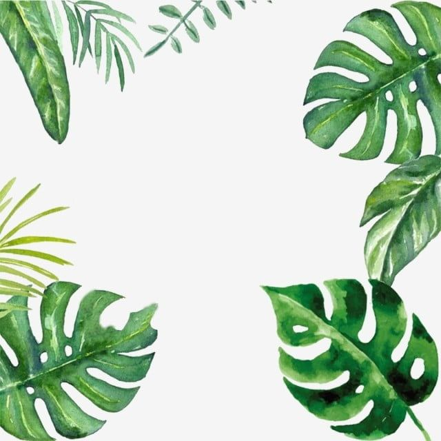 Creative Green Leaf Palm Border Design Material Green Leaf Palm Leaf Png Transparent Clipart Image And Psd File For Free Download Palm Background Palm Tree Photography Border Design