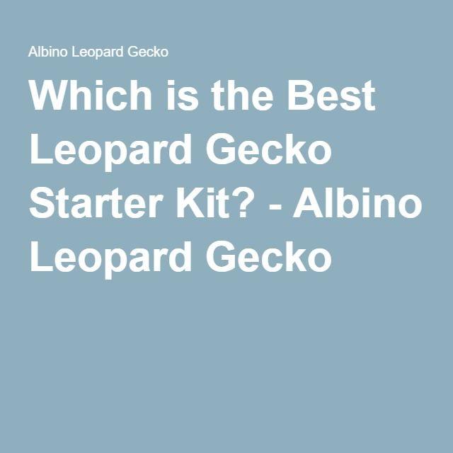 Which is the Best Leopard Gecko Starter Kit? - Albino Leopard Gecko