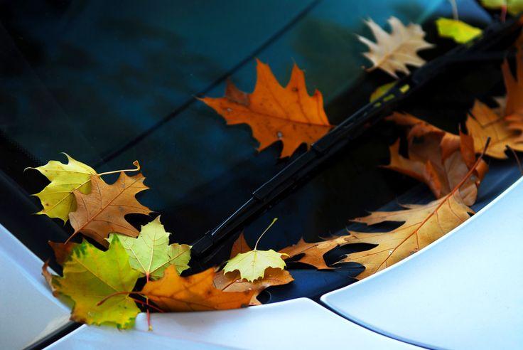 Jak przygotować auto do jesieni? https://www.autodna.pl/blog/jak-przygotowac-auto-do-jesieni/