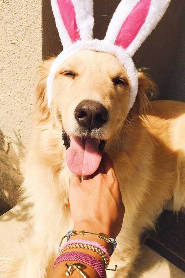 Statement Clutch - Joyful puppy by VIDA VIDA LIm0UvLhsA