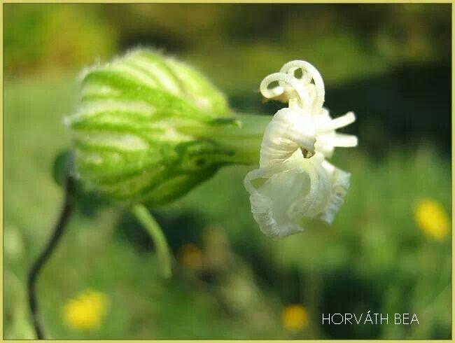 Virágom,virágom!