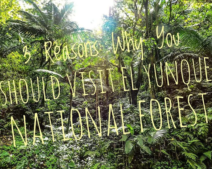 3 Reasons Why You Should Visit El Yunque National Forest | ks-girl-adventures