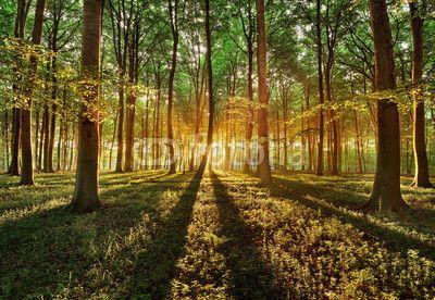 spring forest ©keller