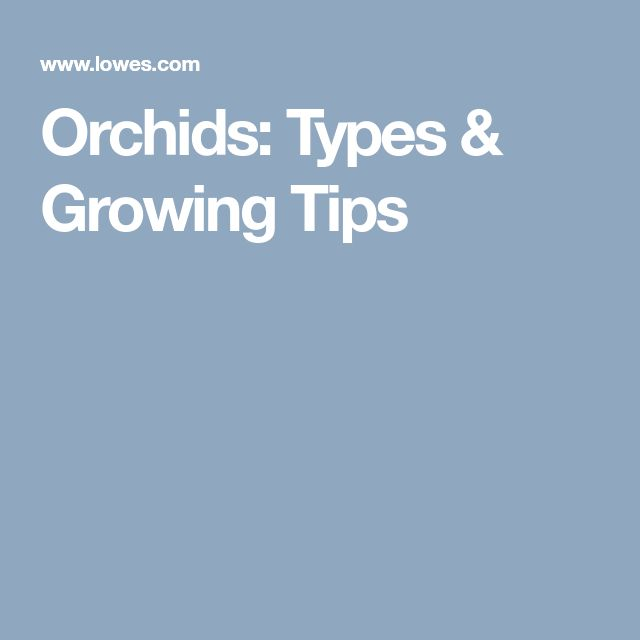 Orchids: Types & Growing Tips