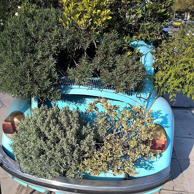 I was looking for a Multi-Purpose Vehicle... #garden