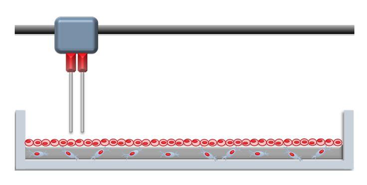 Bioprinting: imprimiendo tejidos humanos | Fundación Aquae | Fundación del Agua