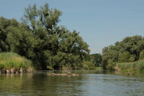 Alte Rhein - Altenrhein ( Fluss - River )  bei Rheineck im Kanton St. Gallen in der Schweiz und Östereich -    Alte Rhein - Altenrhein ( Fluss - River )  bei Rheineck im Kanton St. Gallen in der Schweiz und Östereich . . . *********************************...
