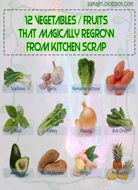12 Vegetables / Fruits That Magically Regrow from Kitchen Scrap #farming #gardening
