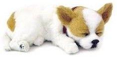Adopteer je eigen huisdier. De Perfect Petzzz zien eruit als echte huisdieren, door hun zachte vacht en doordat ze lijken te ademen. Ze worden geleverd met een mandje, borstel en certificaat van adoptie. De Perfect Petzzz maken geen geluid en hebben een afmeting van 27 x 17 x 10 cm. Exclusief 1 D batterij. Er zijn verschillende Perfect Petzzz pups en katten verkrijgbaar.   Afmeting: volgt later.. - Perfect Petzzz soft Chihuahua