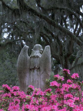 Bonaventure Cemetery, Savannah: Pink Flowers, Savannah Georgia Home, Bonaventure Cemetery, Joanne Well, Cemetery Angel, Savannahgeorgia, Guardians Angel, Weeping Angel, Gardens Angel