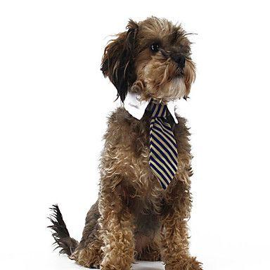 Knappe jongen, met zijn stropdas.