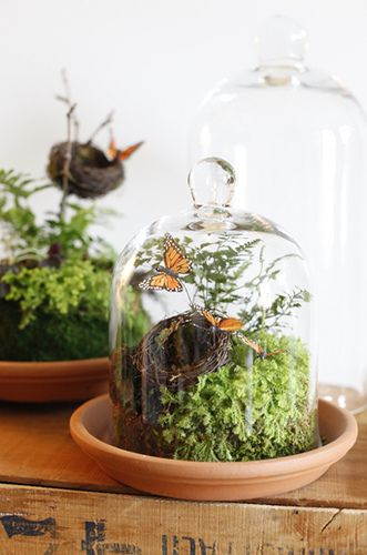 spring in a cloche via what I like
