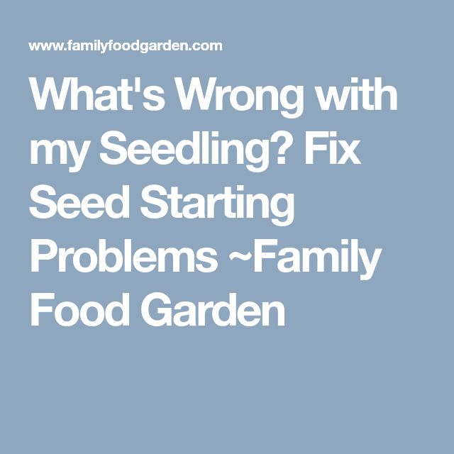 What's Wrong With My Seedling? Fix Seed Starting Problems