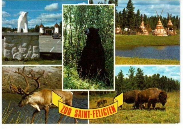 Carte Postale Souvenir du Zoo de St-Félicien vers 1970-1980