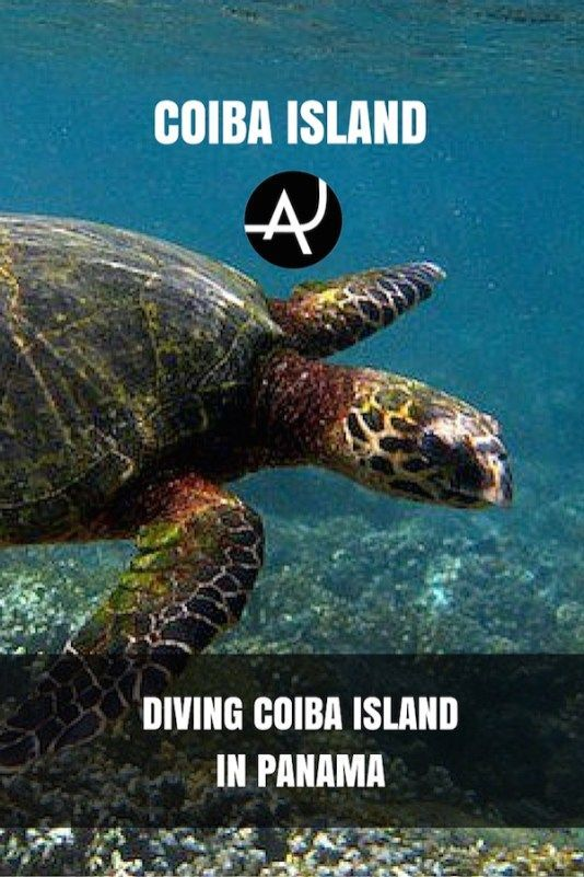 Scuba Diving in Coiba Island, Panama - Best Scuba Diving Destinations - Diving Bucket List - Adventure Vacations - Beautiful Locations and Places to Dive via @theadventurejunkies #scubadivingdestinations