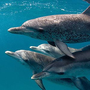 PROTECT GULF WHALES AND DOLPHINS FROM TRUMP