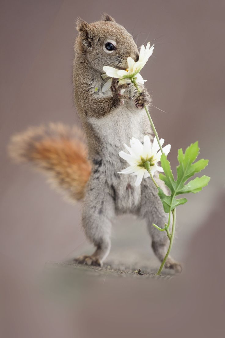 Meaning of white squirrel sighting -  Via 500px Squirrel And Flower By Andre Villeneuve