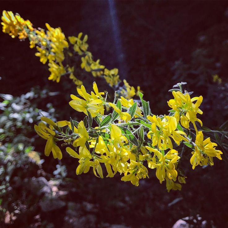 In the #summer something #magic happens to tge #nature that become #colorful at #serino #campania #italy #naturelovers  #flowers #mountains #forest #twitter #yellow #sunday #daytrip #naturephotography