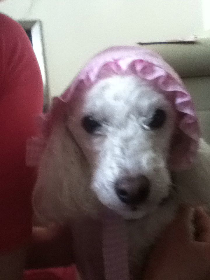 My other dog in a bonnet