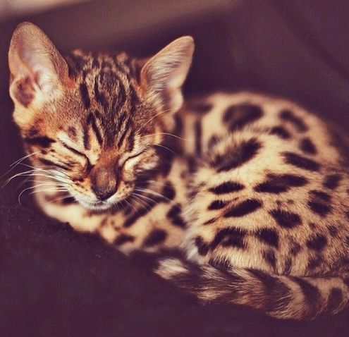 AND I am not a cat fan......... BUT this one is super cute