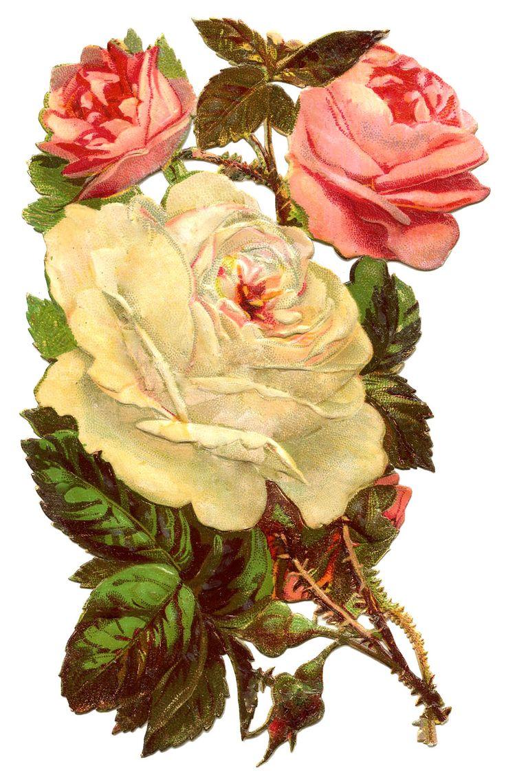 9 White Rose Images Vintage Flowers Pastel Roses Flowers Rose