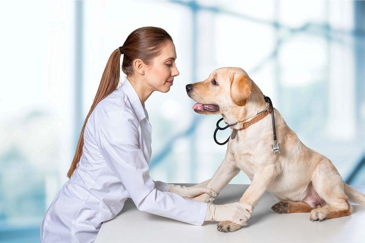 #dog #health