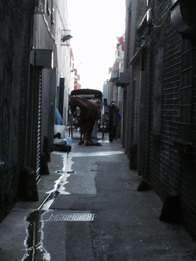 Horse in a lane