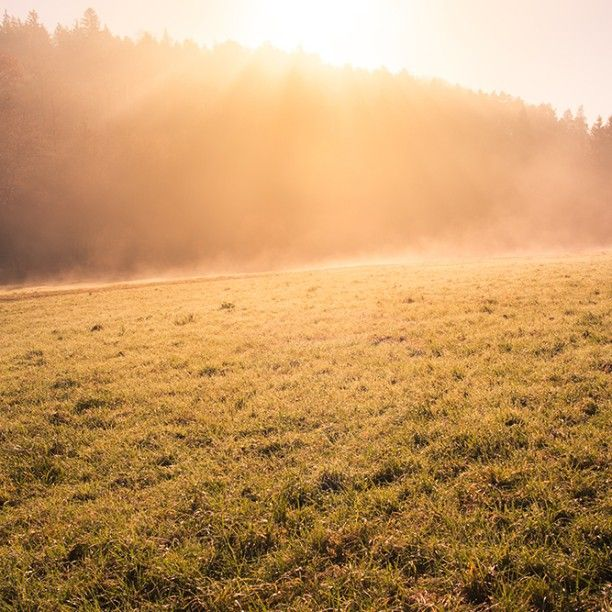 Morning Mist  #sunrays #sunbeams #orange #sonnenaufgang #sunrise #majestic #mystisch #nebel #stimmung #morgenstimmung #wald #forest #wiese #natur #nature #lightroom