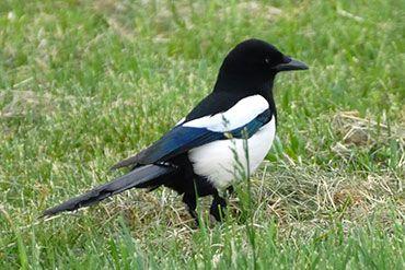 Obrázky a zvuky ptáků je možné i stáhnout