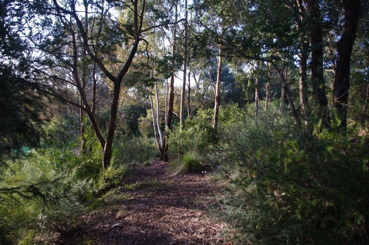 1422 best australian native gardens images on pinterest