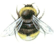 Black Yellow Bumblebee Bee Insect Select-A-Size Waterslide Ceramic Decals