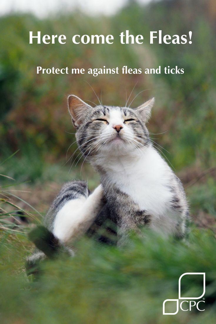 Prepare Your Pets For Fleas And Ticks Cat Fleas Fleas Cat Having Kittens