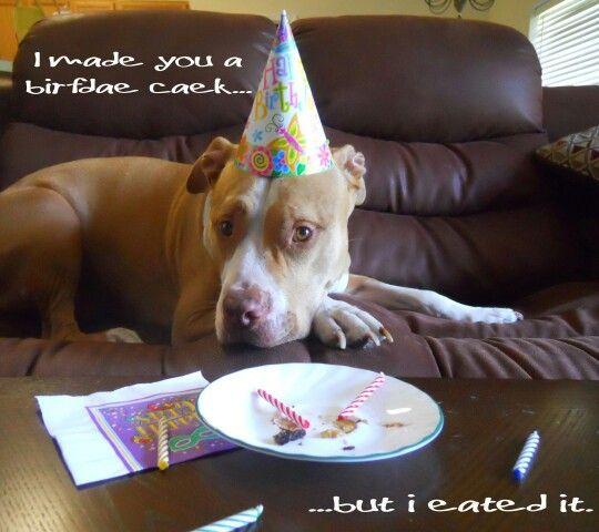 That One Dog Who Eats Your Cake Happy Birthday Dog Funny Puppy Memes Pitbulls