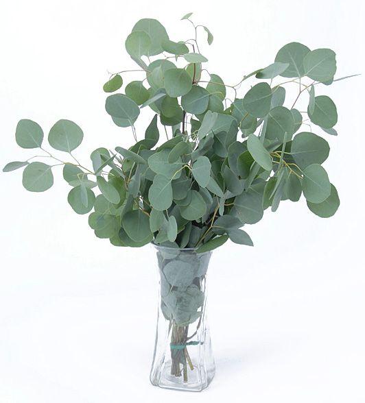 Silver Dollar Eucalyptus; Must grow in the garden :)