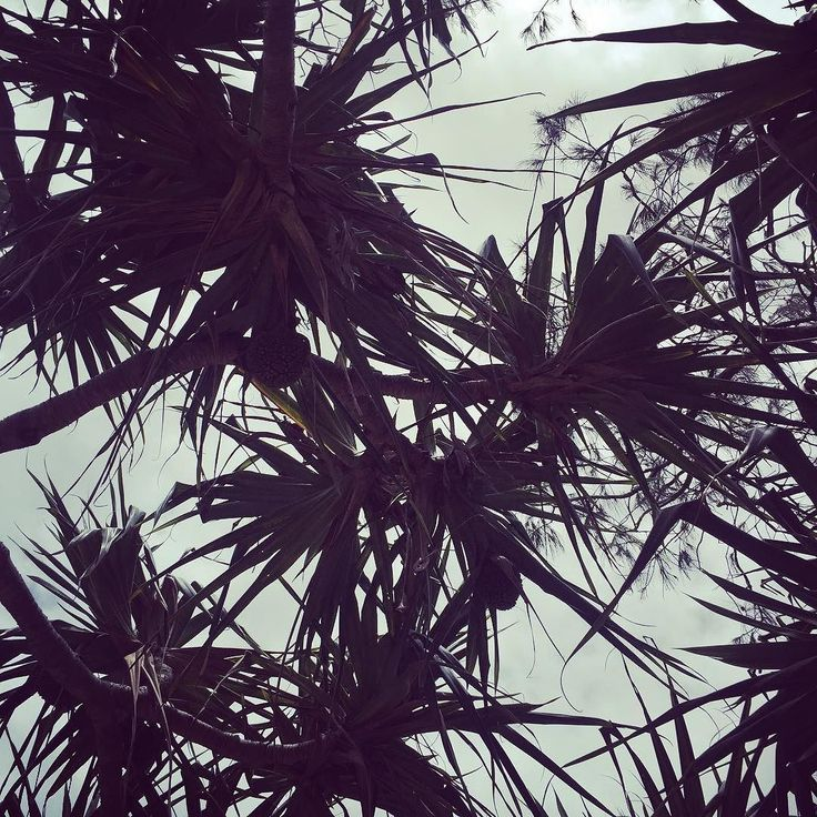 . . . . . . . . . . #palmtrees #beach #beachtrees #interiordesign #interior #design #noosa #queensland #architecture #garden #greenery #foliage