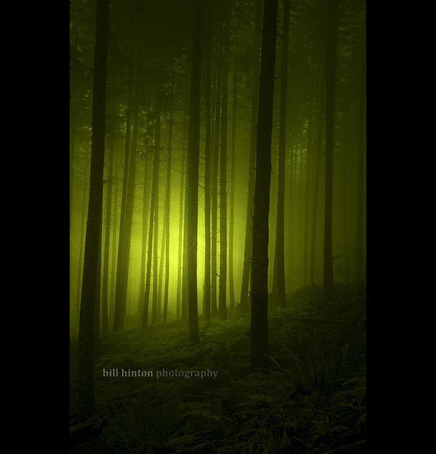 magical forest mist | Bill Hinton #photography | www.billhinton.com/