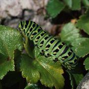 Homemade Garden Bug Spray | eHow