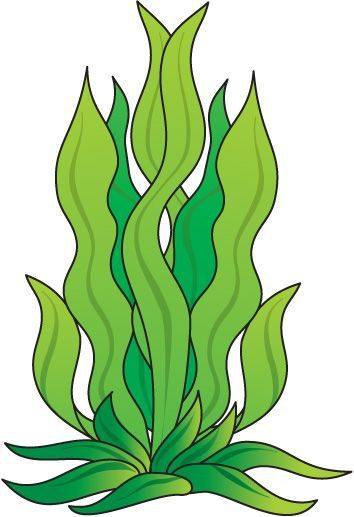 Green Drawing Room: How To Draw Seaweed - ClipArt Best